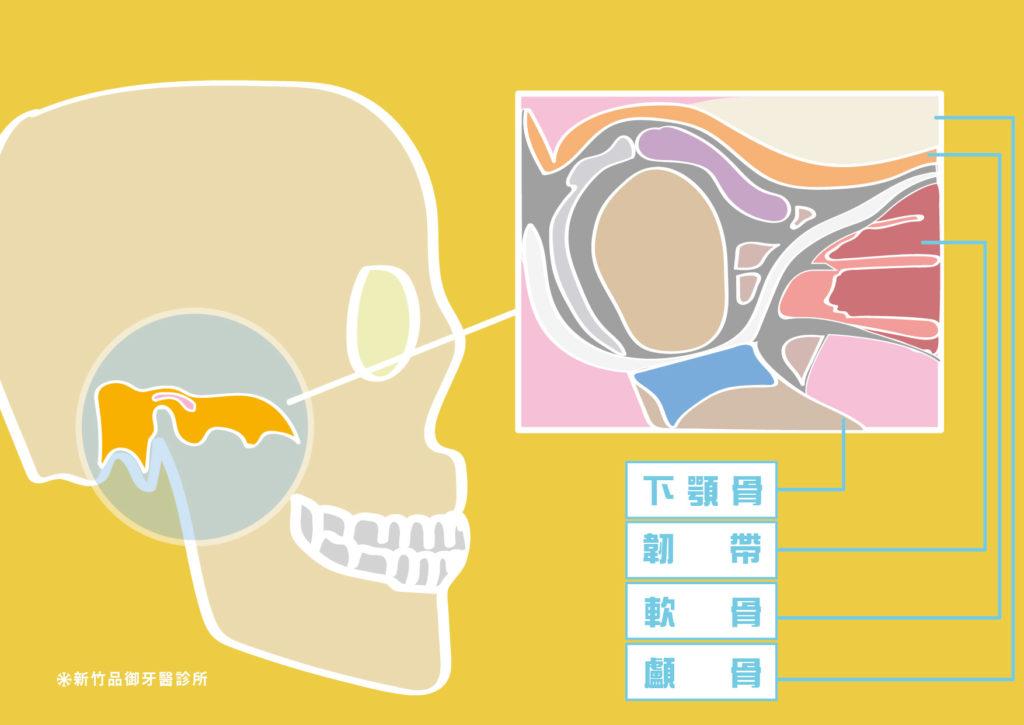 顳顎關節構造圖