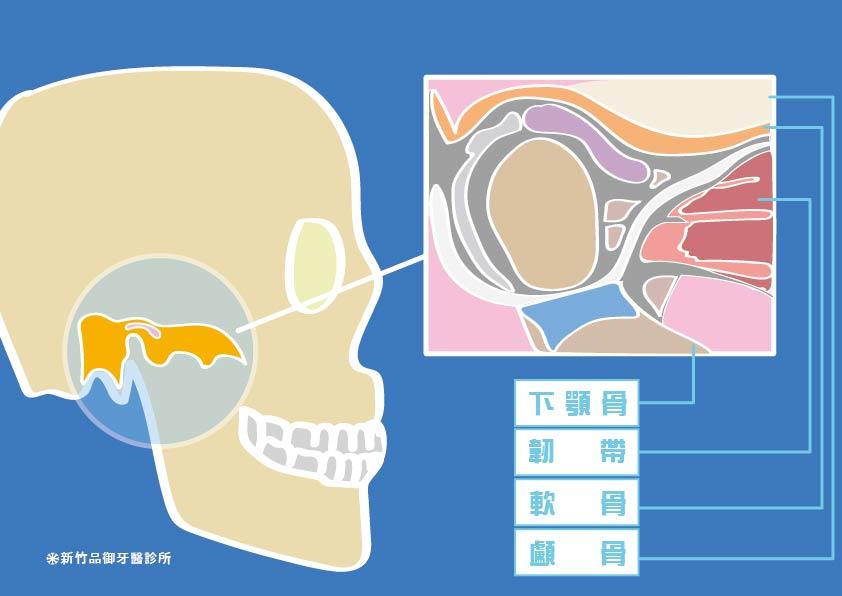 籃底顳顎關節側面構造圖